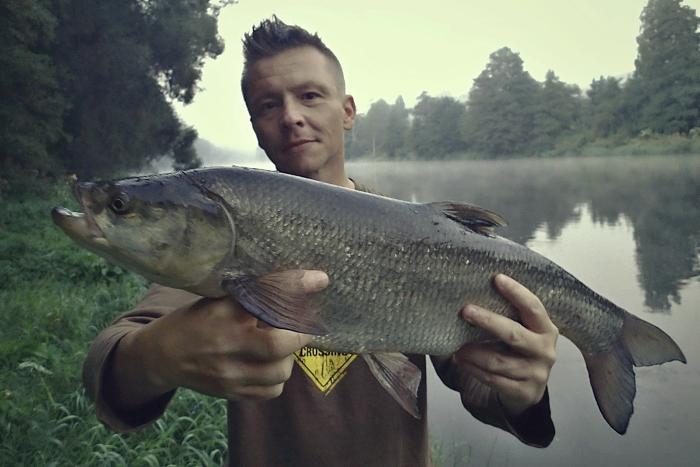 Bolen dravý (2013, řeka Ohře, CZE)
