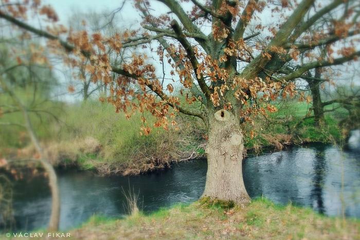 Jednooký strážce Ohře (Strom života)