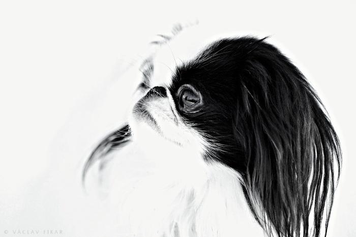 Portrét zvířete 4 / Portrait of Animal 4