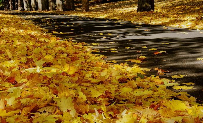 kynzvart - alej - podzim