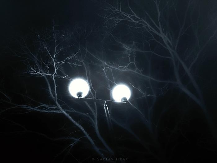 Oči stromu / The Eyes of Tree