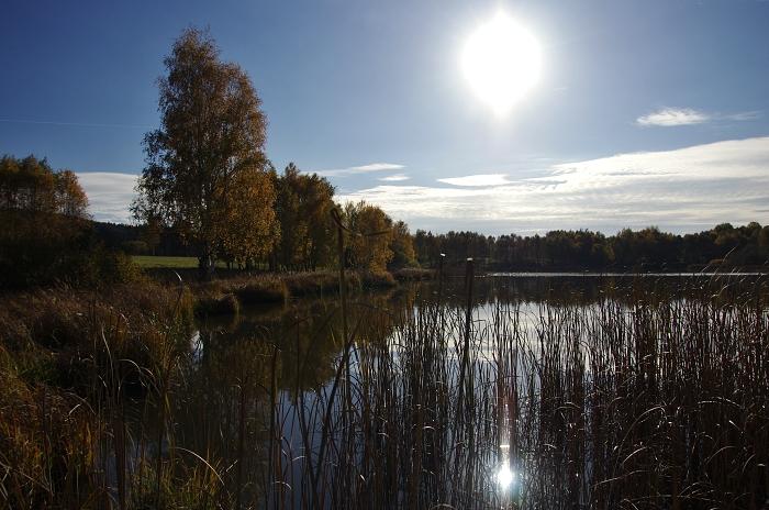 nežichov - rybník