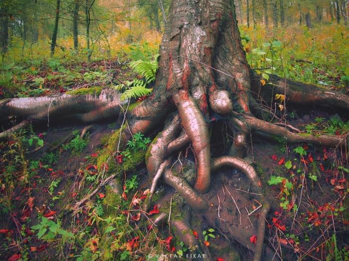 Kořeny Doupovských hor / The Roots of the Doupov Mountains