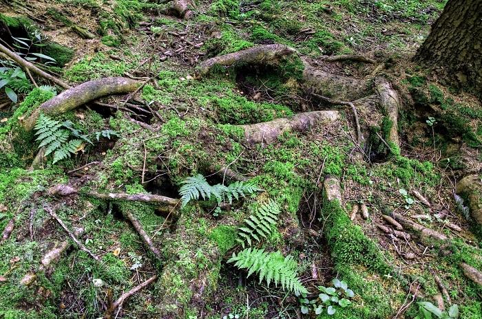 slavkovský les 2